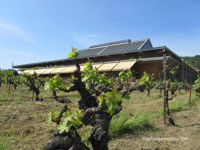 The old and the new: a 100 year old zin vine with the solar panel covered winery in the back ground.