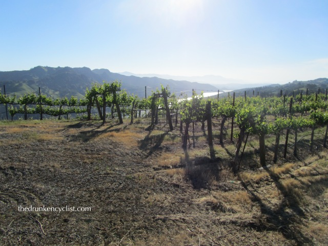 Lake Sonoma Vineyard