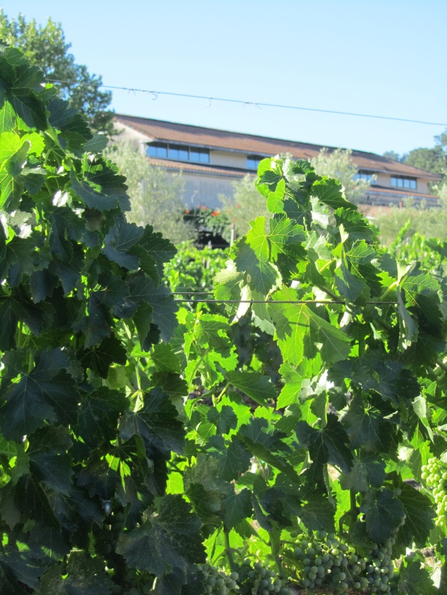 Tablas Creek is all about the vines.