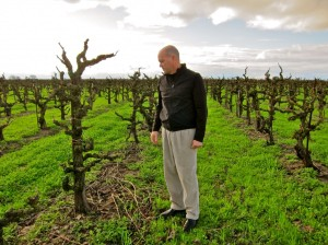 Mike McCay in the Trulux Vineyard (from www.lodinative.com)