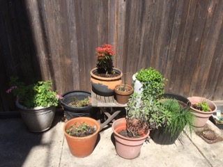 My flower and herb garden.