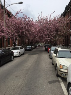 Our street in Spring.
