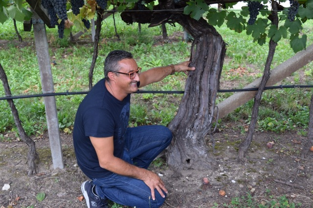 Another vineyard stop, this time to inspect a 250 year old Teroldego vine.