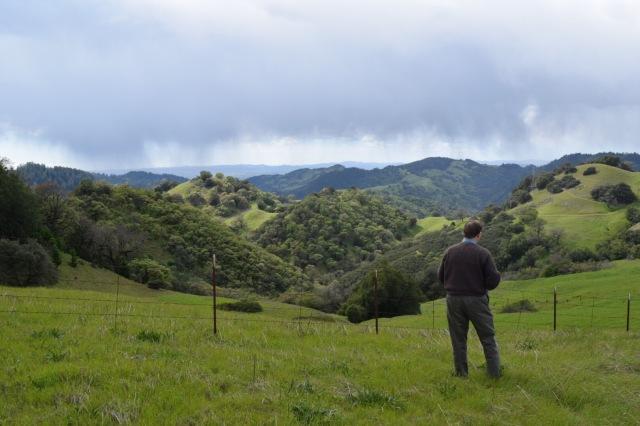 Chris Howell in the vineyard.