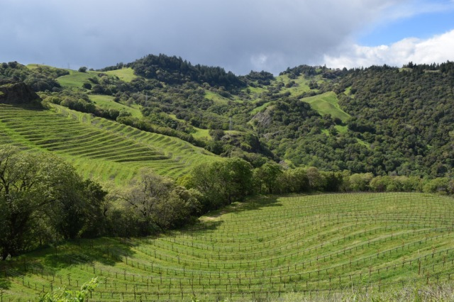 The Cain Vineyard is truly stunning.